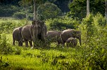 Tourism Authority of Thailand supports elephant welfare through government-community collaboration
